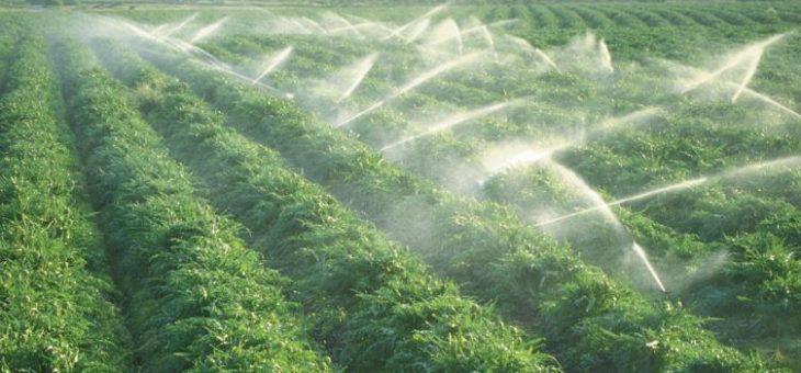 Les couveuses et le test agricole